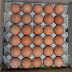 Eggs 6 Trays 101000