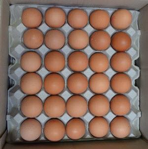 Eggs 6 Trays 101000